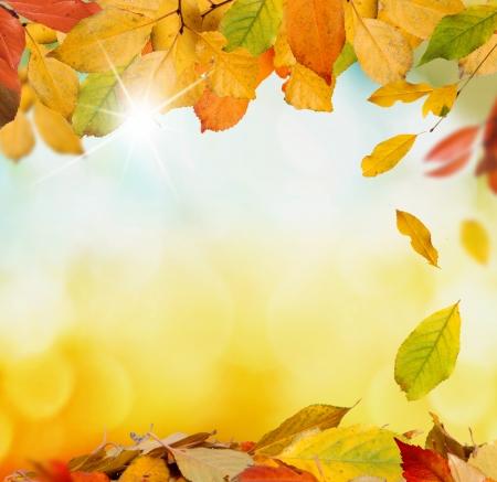 autumn background Stock Photo - 21927416