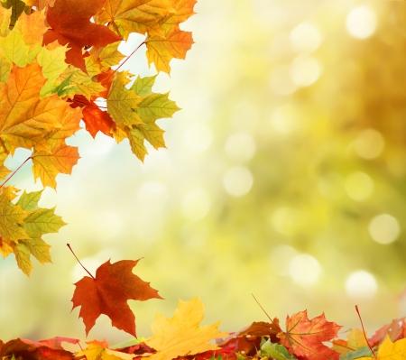 the dry leaves: oto?o fondo Foto de archivo