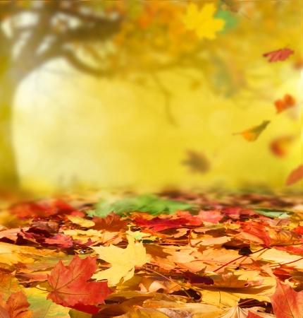 folhagem: fundo do outono