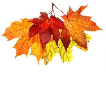 Hojas de otoño aislados