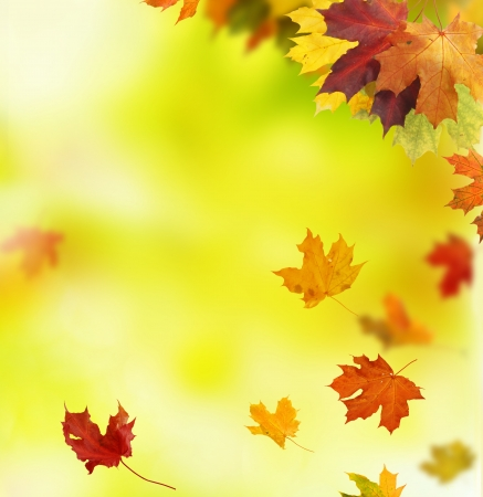 autumn leaves  Stock Photo - 22145911