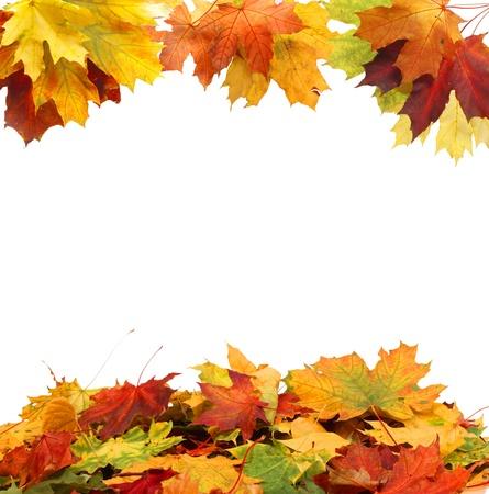 the dry leaves: Hojas de oto?o aislados