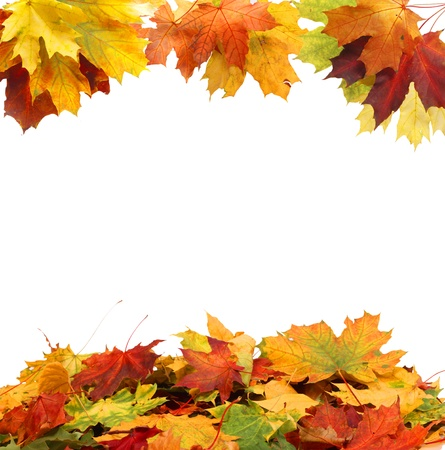colorful maple trees: Isolated Autumn Leaves
