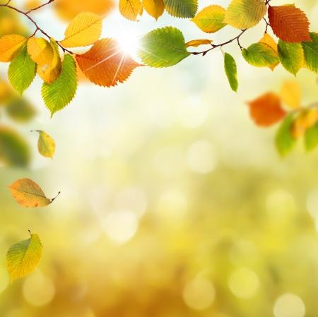 tree in autumn: Autumn Leaves