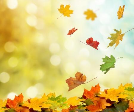 natural landscape: autumn leaves