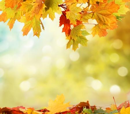 dry tree: autumn background