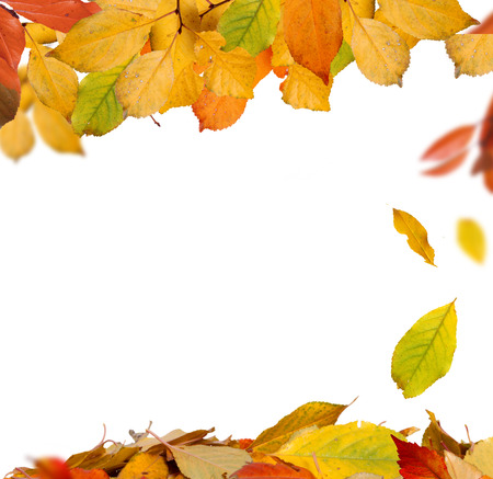 Isolated Autumn Leaves Stock Photo - 23109943