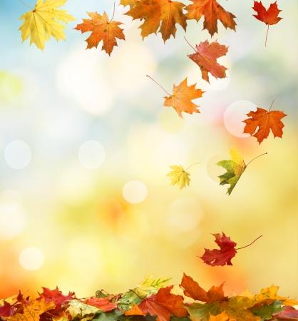 the dry leaves: las hojas de oto�o Foto de archivo