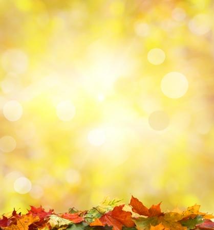 fall border: autumn leaves