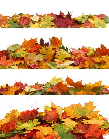 folhagem: Folhas de outono isoladas