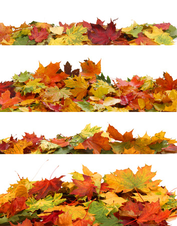 Isolated Autumn Leaves  Stock Photo - 23109950