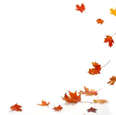 grens: Geïsoleerde herfstbladeren