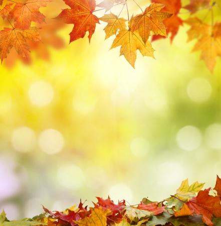 feuilles d arbres: fond d'automne Banque d'images