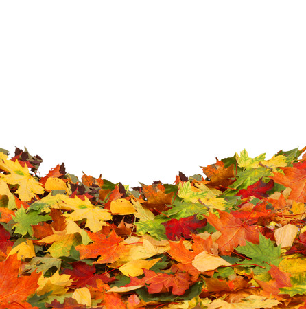 Isolated autumn leaves Stock Photo - 23109955