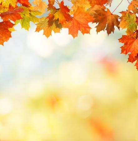 hojas secas: oto?o fondo Foto de archivo