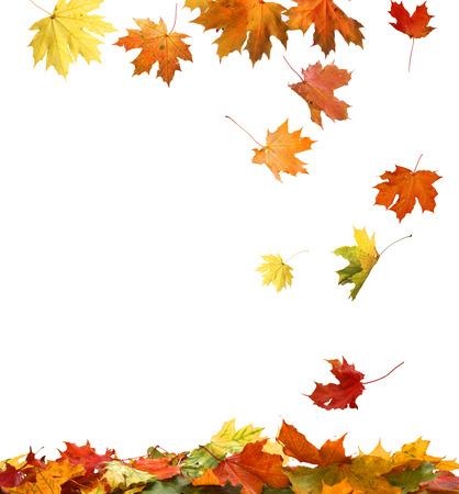 hojas secas: Hojas de oto�o aislados