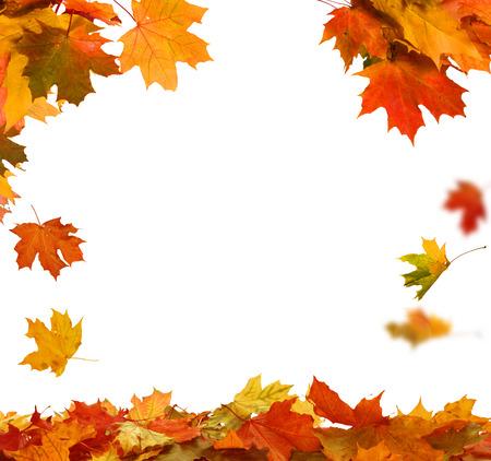 Folhas de outono isoladas