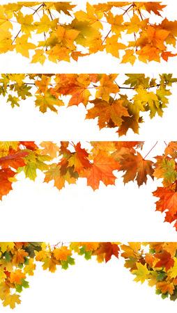 Isolated Autumn Leaves  photo