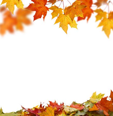 秋の紅葉を分離