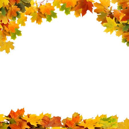 hojas secas: Aislados hojas de oto�o Foto de archivo