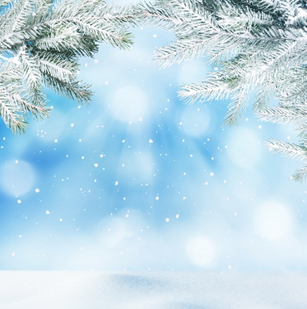 winter landscape: winter background