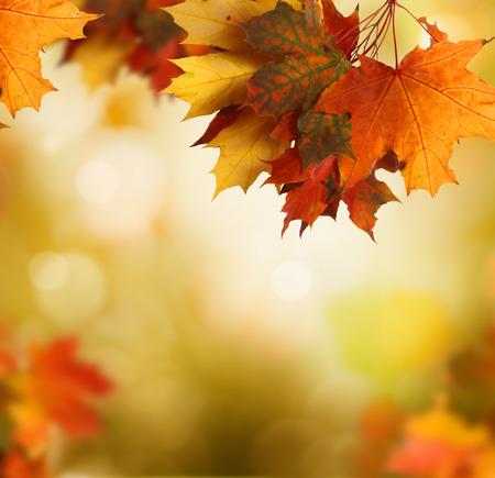 Autumn forest background photo