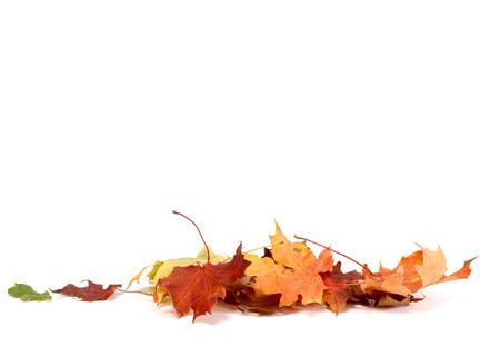 Autumn Leave Standard-Bild