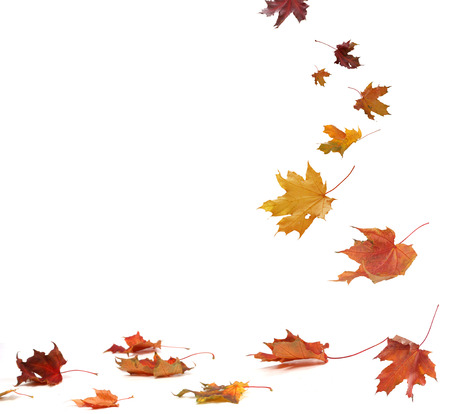 Isolated autumn leaves Stock Photo