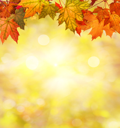 feuilles d'automne Banque d'images