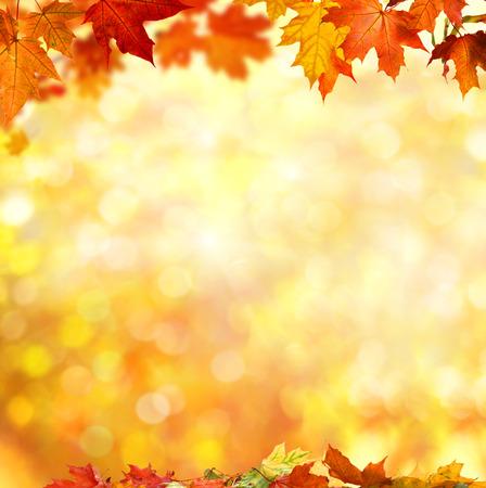 autumn background Standard-Bild