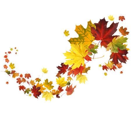 흰색 배경에 가을 떨어지는 나뭇잎
