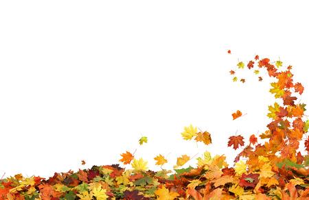 가을 흰색 배경에 나뭇잎 떨어지는