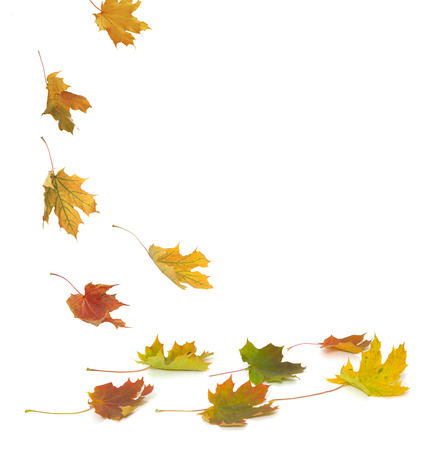 Isolated autumn leaves Banque d'images