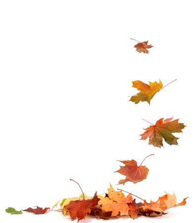 feuille arbre: Feuilles d'automne isolés Banque d'images
