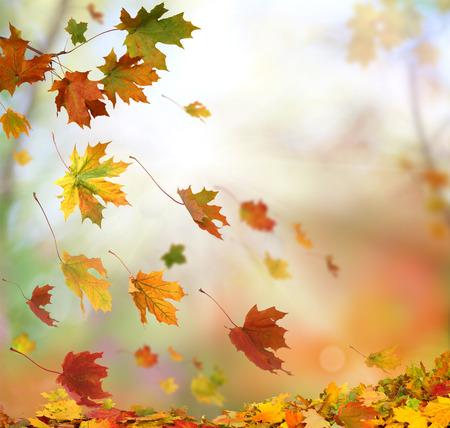falling leaves: Autumn falling leaves Stock Photo