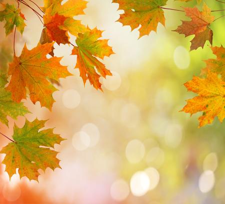 leaf texture: Autumn  leaves Stock Photo