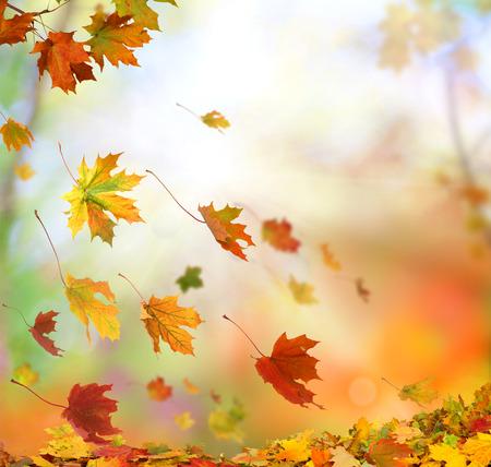 Autumn falling leaves Archivio Fotografico