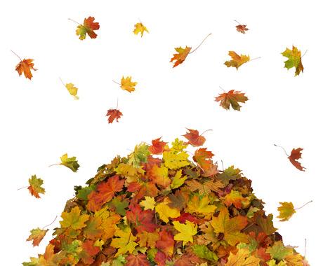 Automne la chute des feuilles sur fond blanc Banque d'images