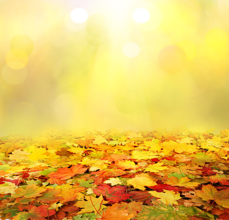 'leaf fall': autumn background Stock Photo