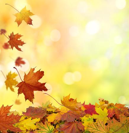 Autumn  leaves Standard-Bild