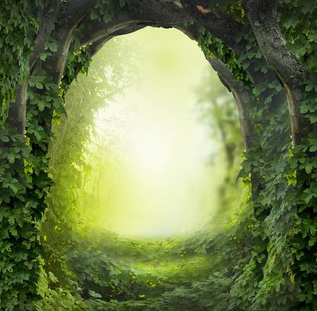 forêt magique Banque d'images