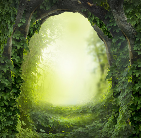 magic forest Stok Fotoğraf - 32053979