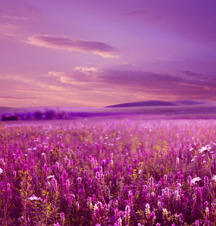 Pink sunset is in the flower field stock photo picture and royalty pink sunset is in the flower field stock photo 32053254 mightylinksfo