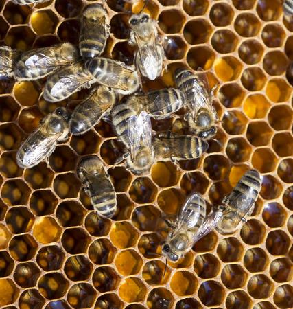 praiseworthy:  bees