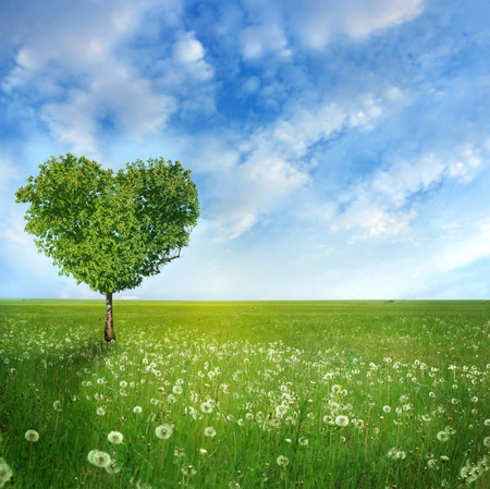 nature natural: Tree of love  Stock Photo