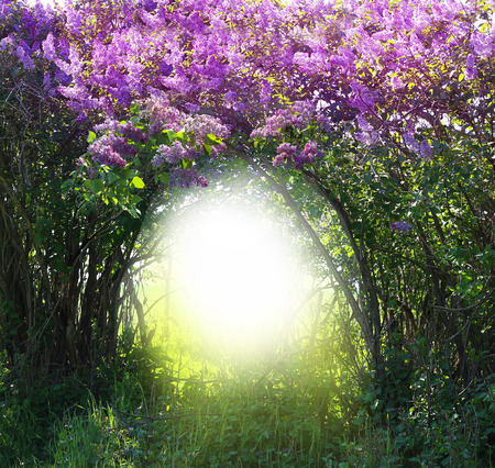 tunel: Magia primavera del paisaje forestal Foto de archivo