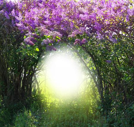 Magic spring forest landscape
