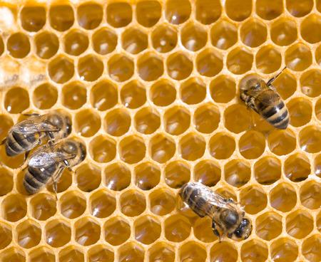 bee pollen:  bees