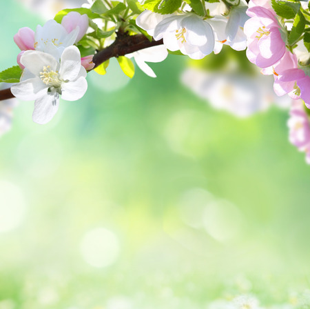 spring background  photo