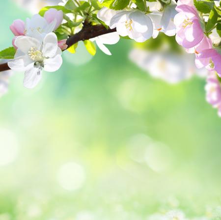 easter tree: voorjaar achtergrond